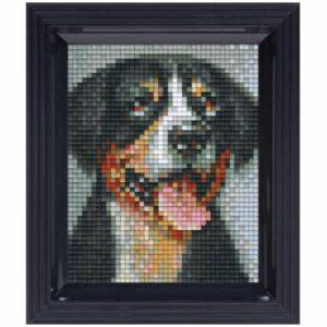 Pixelhobby Bild Sennenhund